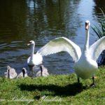 Liebevoll leben und lernen - mit Kindern natürlich leben - Mütter sind unbezahlbar - mehr Wertschätzung